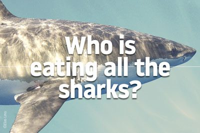 These scary predators are disappearing from our oceans, but no one seems to be hungry for them