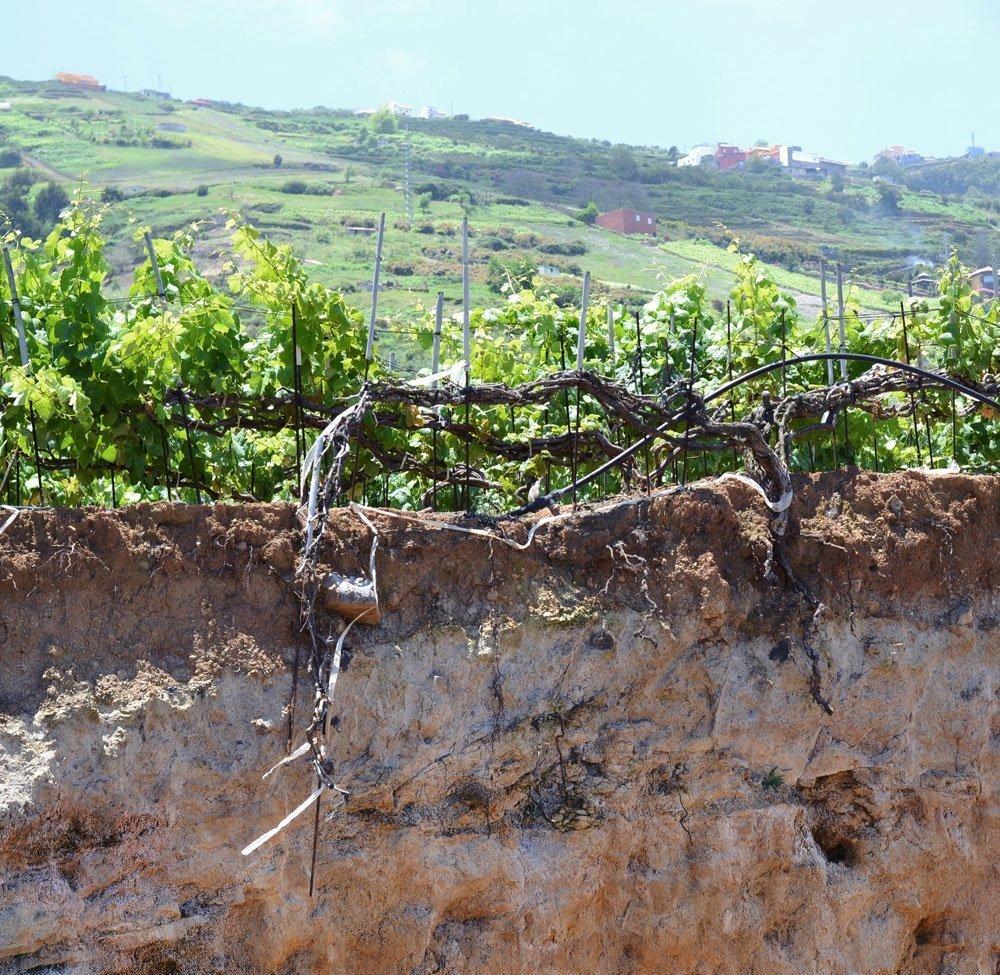 blogging_wine_tour_canary_islands_decesare_unisg_pollenzo-1