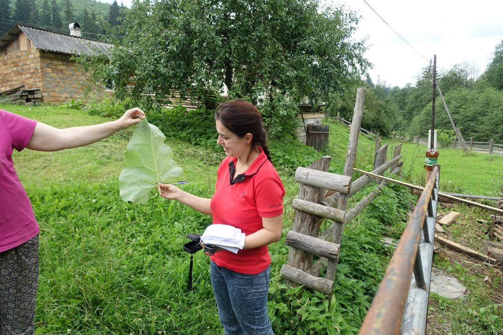 DiGe - Ethnobotany of divided generations in the context of