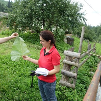 The Hutcul village in the Carpathian region, interview with identifying medicinal plants. To access the village one should drive with no road for 2 hours and the nearest hospital is 2,5 hours to drive. Photo by Natalie Stryamets