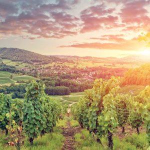 Wine and Vineyards of Burgundy